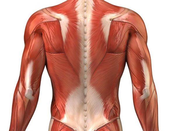 Corso di anatomia del massaggio - Accademia massaggio MWA